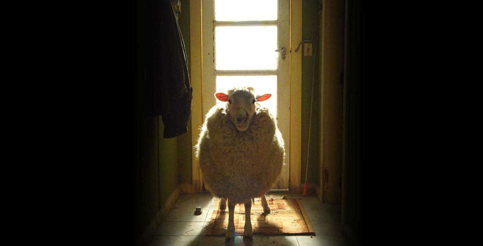 black sheep de jonathan king